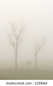 Two Trees in a foggy field in early morning - Tennessee, USA.