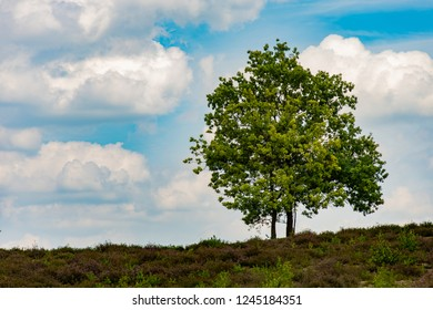 Two trees groing on a hill