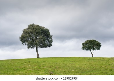 Two trees in the meadow, with a dark cloudy sky
