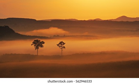 Two trees in the mist and mountains in the morning.
