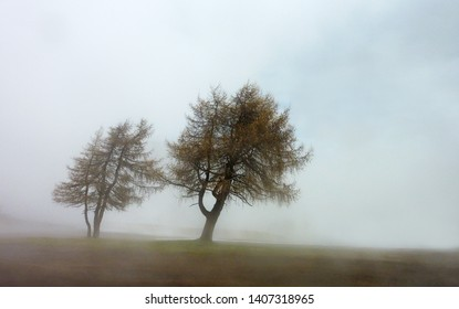 Two trees in misty moody fog