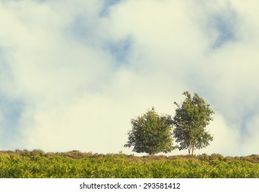 Two Trees on Cloudy Sky