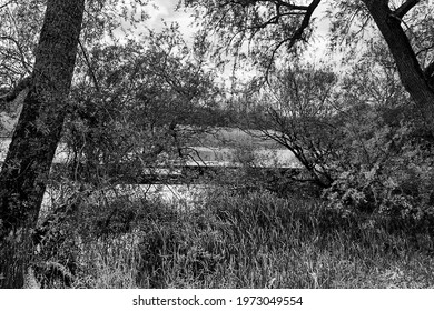two trees on the edge of a river analogue picture taken with a black and white film