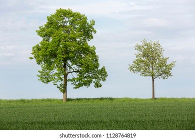 Two trees on farmland in spring, Germany