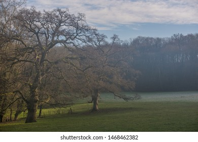 Two trees on a foggy morning