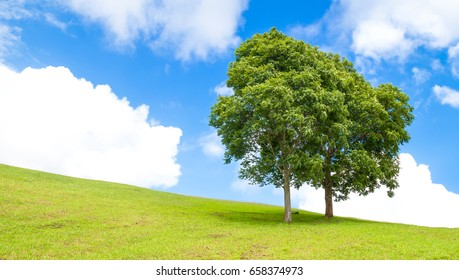 Two trees on a hill with beautiful sky and clouds during the rainy season.