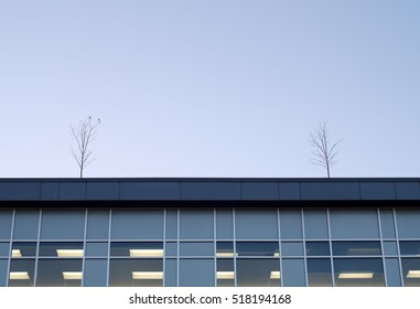 two trees on office building top, vegetable roof, sky and windows
