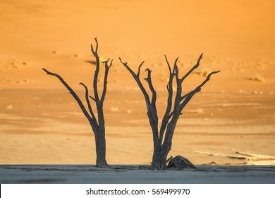 Two Trees on a salt pan