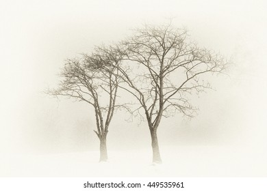 Two trees on a snowy field in an arty way