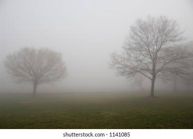 Two Trees on a very foggy Morning