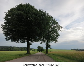 Two trees over a blue sky