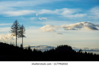 two trees protruding out from a coniferous forest - back lighted shot - Wurbauerkogel Austria