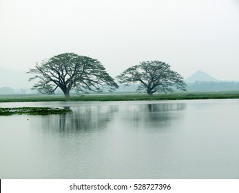 Two trees with The River