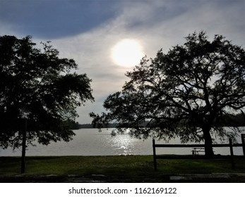 Two Trees Silhouetted by Hazy Sun Near  Rippled Water