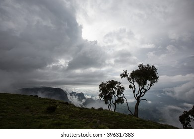 Two trees in Simien mountains Ethiopia with clouds at the background