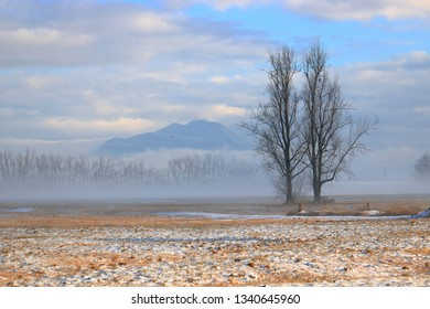 Two trees stand side-by-side on a rural acreage overlooking grassland while fog rises in the early morning during the early Spring season.