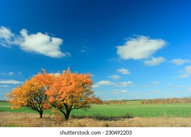 Two trees with yellow leaves standing side by side