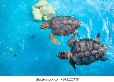 Two turtles swimming in a blue tank