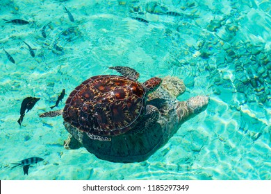 Two turtles in turquoise water