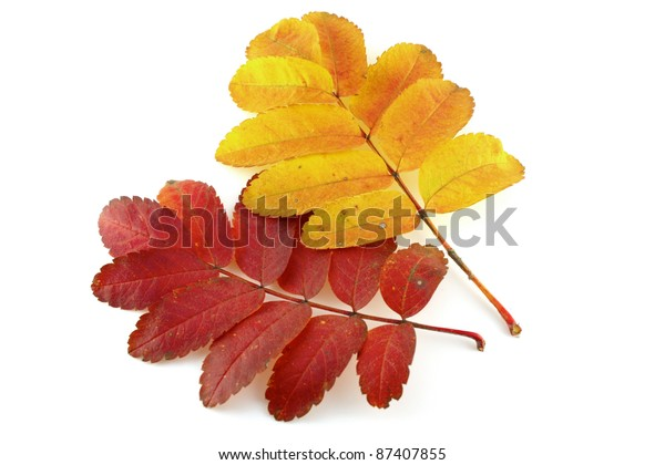 two-twigs-rowantree-color-autumn-600w-87