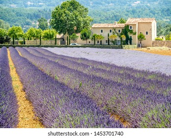 Two types of lavender (lavandin) in field in front of stone house in southern France.