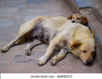 two vagrant dogs sleep at the road side , her puppy sleeps near and put head on the back, love of mother to  baby without condition, love is beautiful.