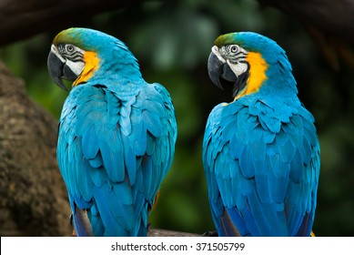 two vivid and colorful ara parrot birds sitting together as friends and looking same direction