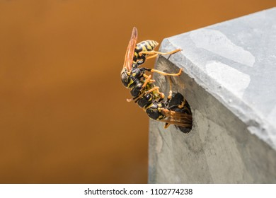 two wasps in front of their wasp nest share their food
