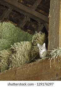 Two watchful cats (one hiding behind and above the other) in hayloft of barn