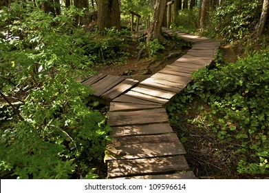 Two Ways Cross Trail. Wooden Pathway Trail in Olympic National Park. Cape Flattery Trail. Washington State, USA. Recreation Photo Collection.