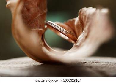 Two wedding rings with diamond incrustation, super close up shot in a dry maple leaf