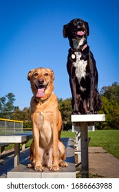 Two well trained dogs sitting side by side on bleachers
