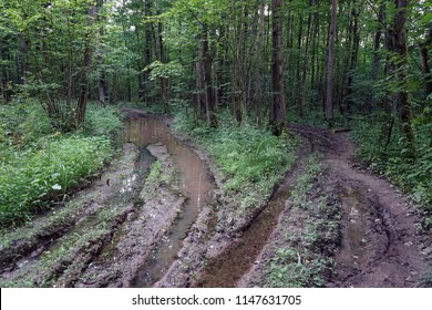 Two wet dirt roads in the forest
