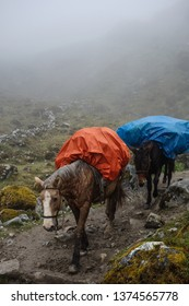 Two wet and exhausted horses carrying some luggage of tourists on the Salkantay Trek to Machu Pichu, Peru