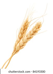 two wheat grains isolated white