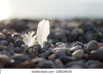 two white bird feathers on the seashore on a pebble beach