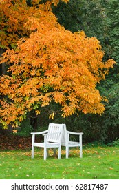 Two white chairs under a tree with orange leaves