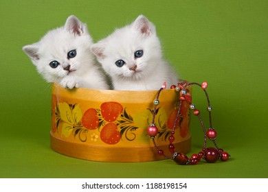 Two white fluffy kitten britan sit in a basket on a green background
