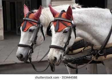 two white horses with red hats
