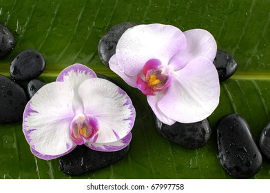 Two white orchid and stones on banana leaf