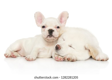 Two white puppies, Japanese Akita inu and French bulldog relax together on a white background. Baby animal theme