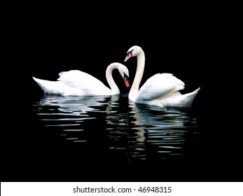 Two white swans, isolated on black