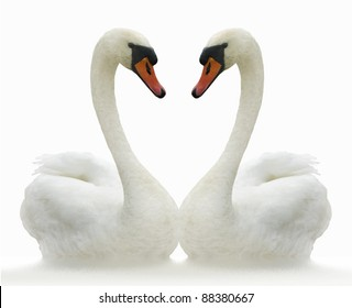 Two white swans on ripple surface.