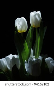 two white tulips standing out from a bunch on black background as a symbol of love