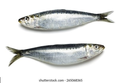 Two Whole Sardines on White Background