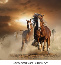 Two wild chestnut horses running together in dust, front view