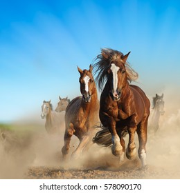 Two wild chestnut horses running together in dust, against the nature background