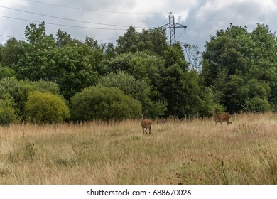 two wild deer in natural habitat feeding from the wild grass.