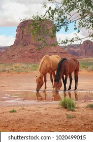 two wild horses drinking at watering hole