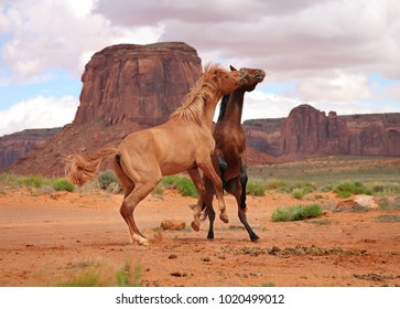 two wild horses fighting near butte in Southern Utah